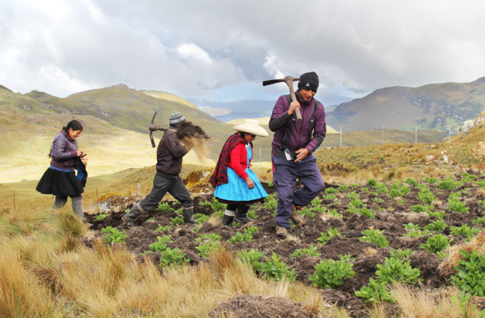Acuña and her family lived off the potatoes and other crops they grew, and kept sheep and cows for milk and cheese. Photo: Goldman Environmental Prize