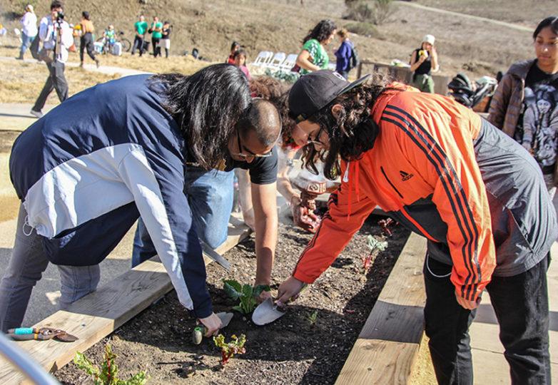 Urban Campesinx y Common Roots, ambos programas de PODER, siembran semillas en la Granja Comunitaria. Foto: Adelyna Tirado
