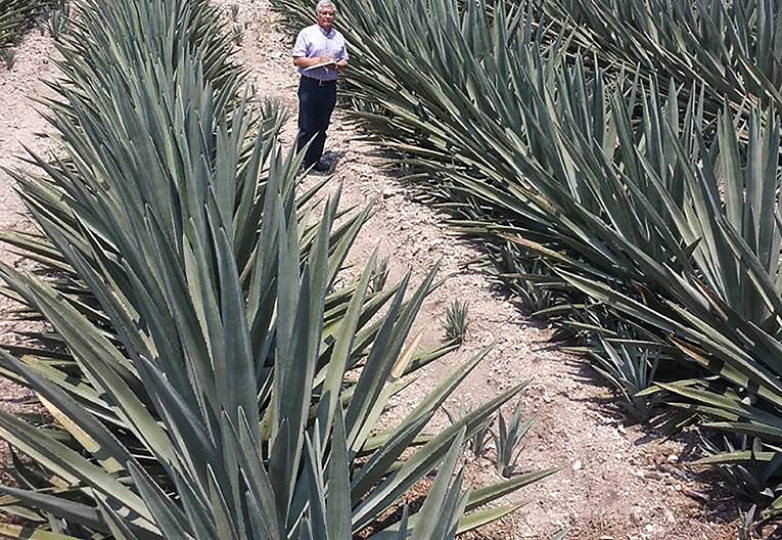 Dr. Remigio Madrigal is an expert on the history and process of tequila production. Courtesy: Remigio Madrigal
